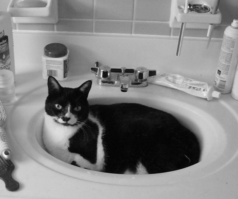 Kink in sink b&w